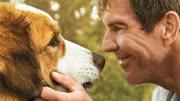 《一条狗的使命》续集《一条狗的使命2》中...