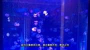 北京動物園海洋館-水母