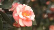 簡單幾筆就能學會畫漂亮的玫瑰花,你學會了