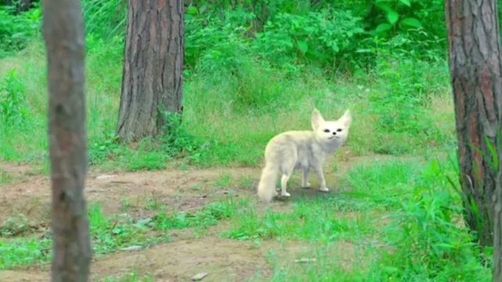 我為宮狂:皇后好心救了一只小狐貍,危難時刻,狐貍變成人形報恩
